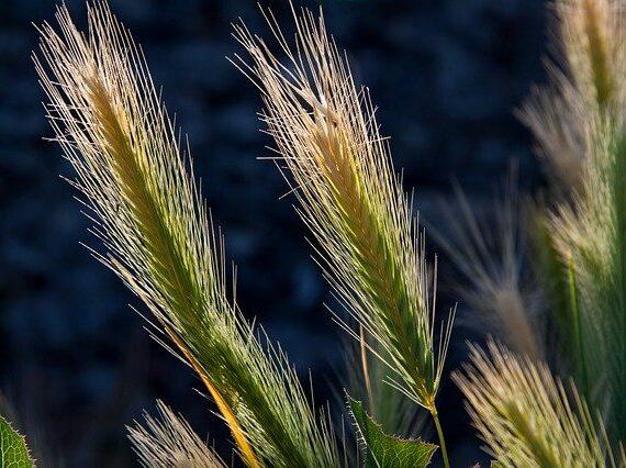 Födermittel für Landwirtschaft und Gartenbau